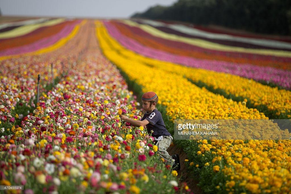 Flores no Sul de Israel