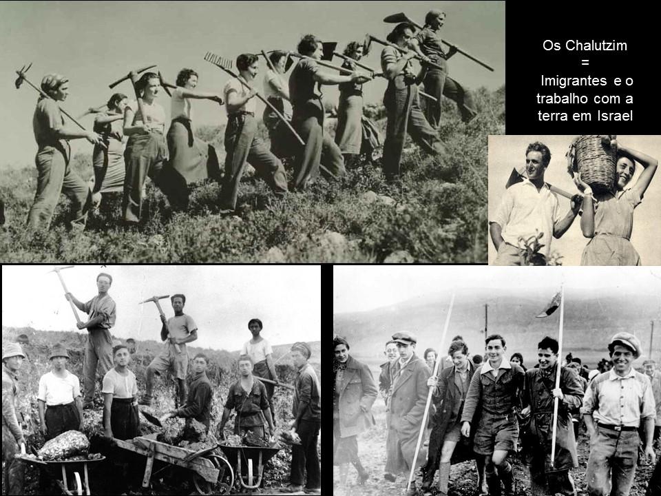 Os Chalutzim os pioneiros- imigrantes e o trabalho com a terra.